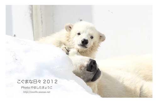 こぐまカレンダー表紙2012
