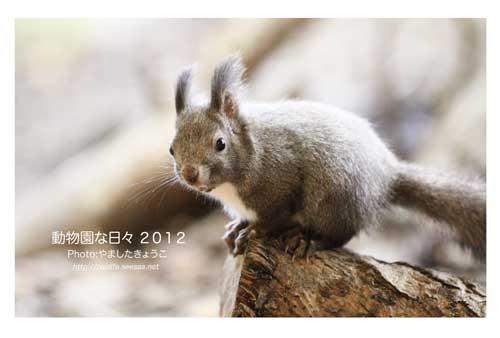 2012動物園カレンダー表紙