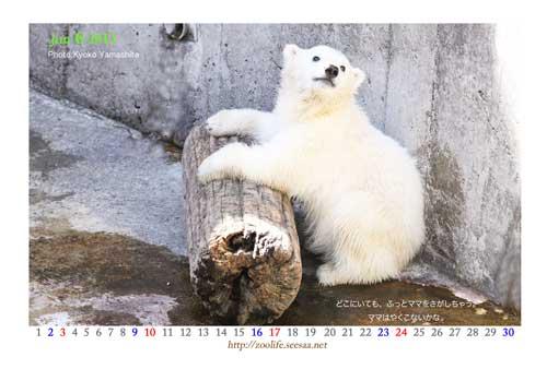 こぐまカレンダー6月