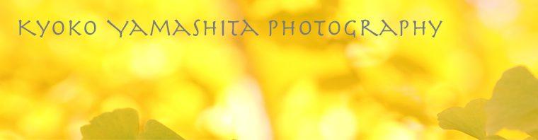 kyoko yamashita photography